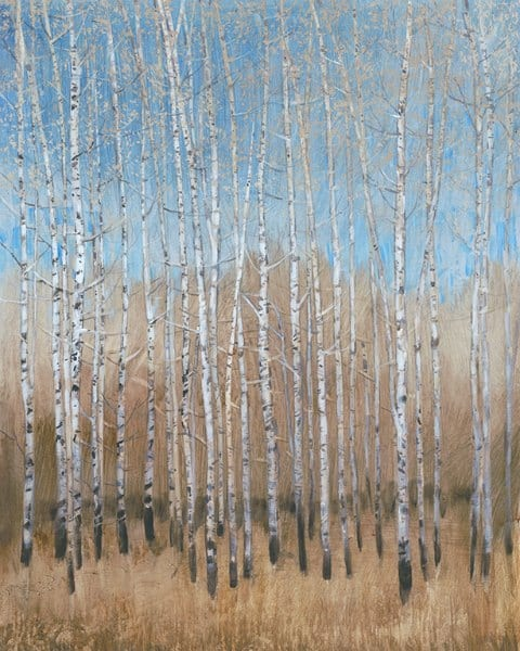 Birch Trees SSSB2 - Framed Scenery Artwork from Interior Elements, Eagle WI