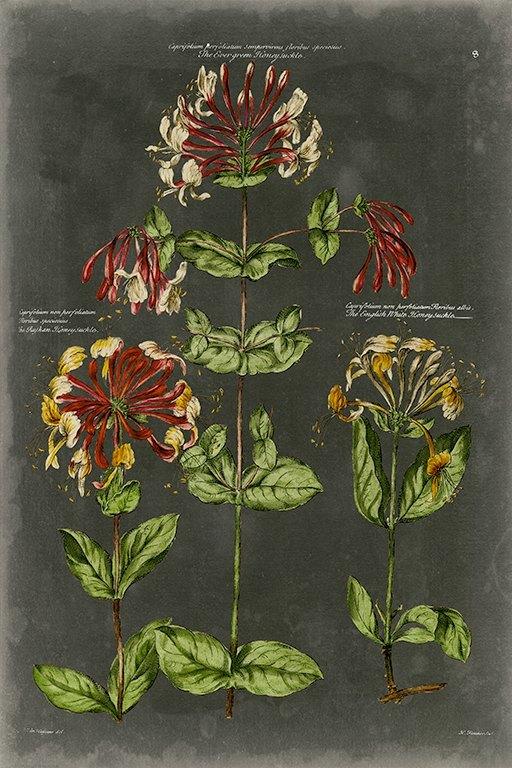Black Botanical BotBB1 - Framed Artwork from Interior Elements, Eagle WI