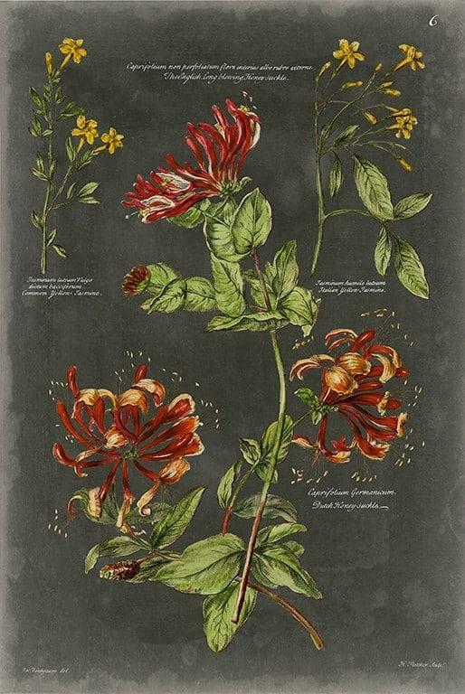 Black Botanical BotBB2 - Framed Artwork from Interior Elements, Eagle WI