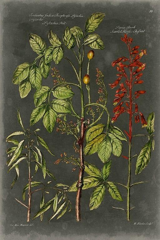 Black Botanical BotBB3 - Framed Artwork from Interior Elements, Eagle WI