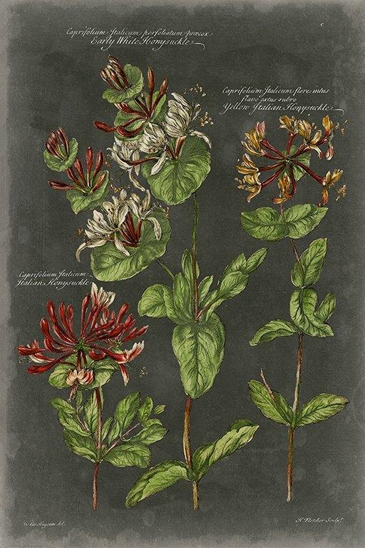 Black Botanical BotBB4 - Framed Artwork from Interior Elements, Eagle WI