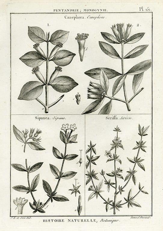 Black White Botanicals BotBWB1a - Framed Artwork from Interior Elements, Eagle WI