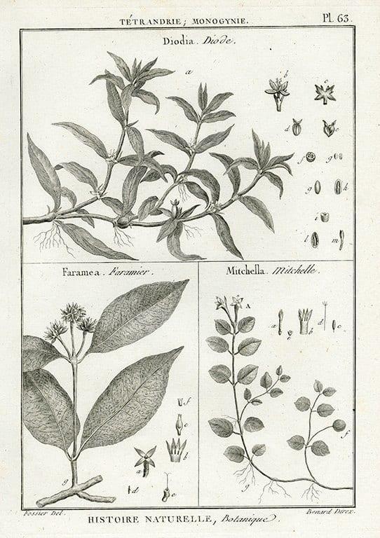Black White Botanicals BotBWB2a - Framed Artwork from Interior Elements, Eagle WI
