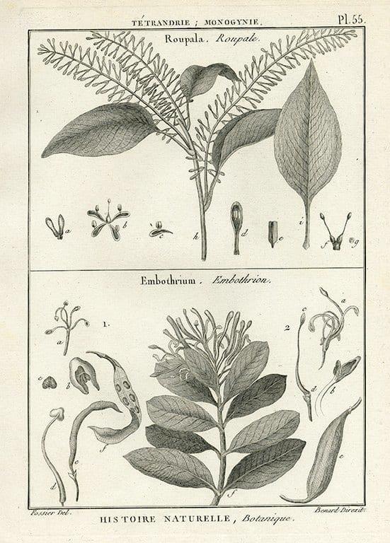 Black White Botanicals BotBWB3a - Framed Artwork from Interior Elements, Eagle WI
