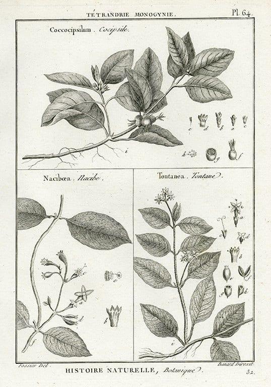 Black White Botanicals BotBWB4a - Framed Artwork from Interior Elements, Eagle WI