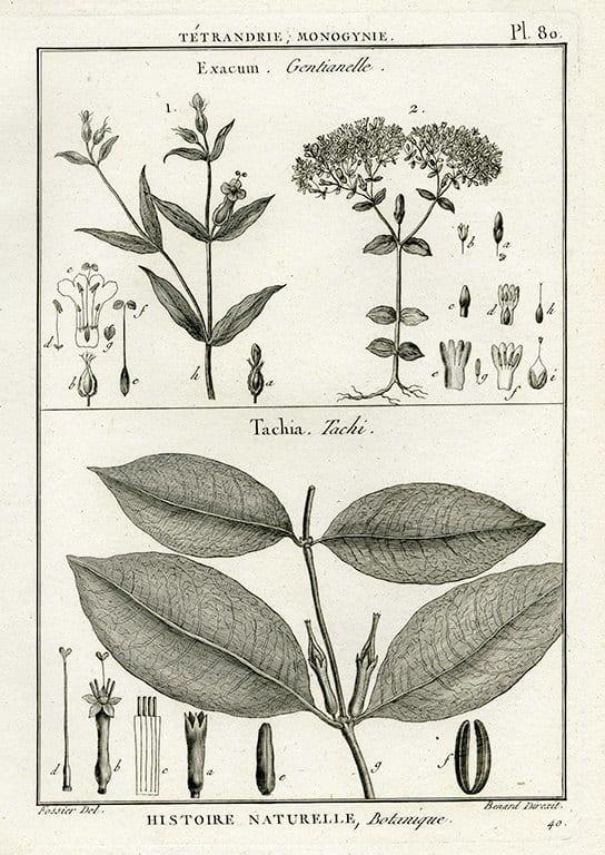Black White Botanicals BotBWB5a - Framed Artwork from Interior Elements, Eagle WI