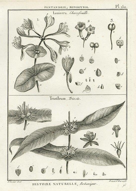 Black White Botanicals BotBWB6a - Framed Artwork from Interior Elements, Eagle WI