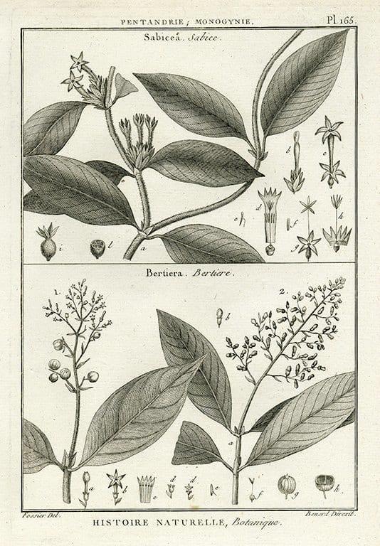 Black White Botanicals BotBWB7a - Framed Artwork from Interior Elements, Eagle WI