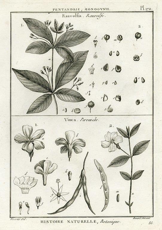 Black White Botanicals BotBWB8a - Framed Artwork from Interior Elements, Eagle WI