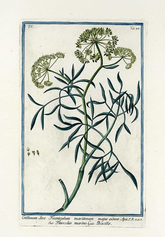 Bonelli Botanical BotBB10a - Framed Artwork from Interior Elements, Eagle WI