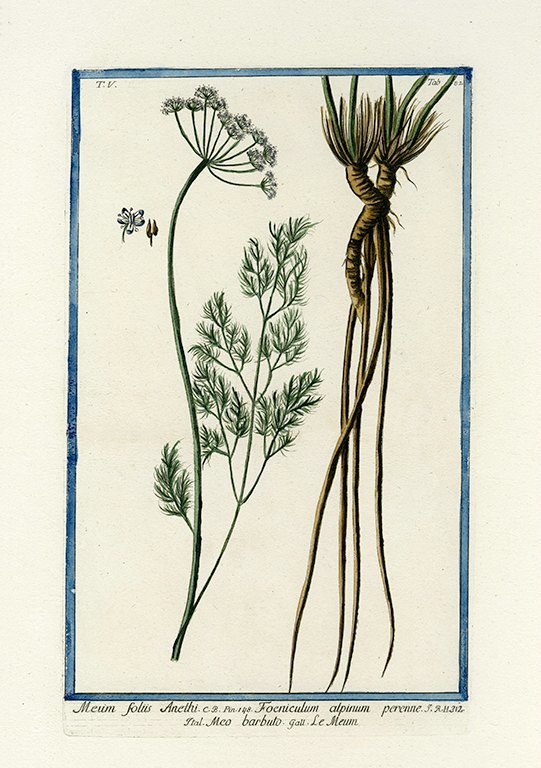 Bonelli Botanical BotBB11a - Framed Artwork from Interior Elements, Eagle WI