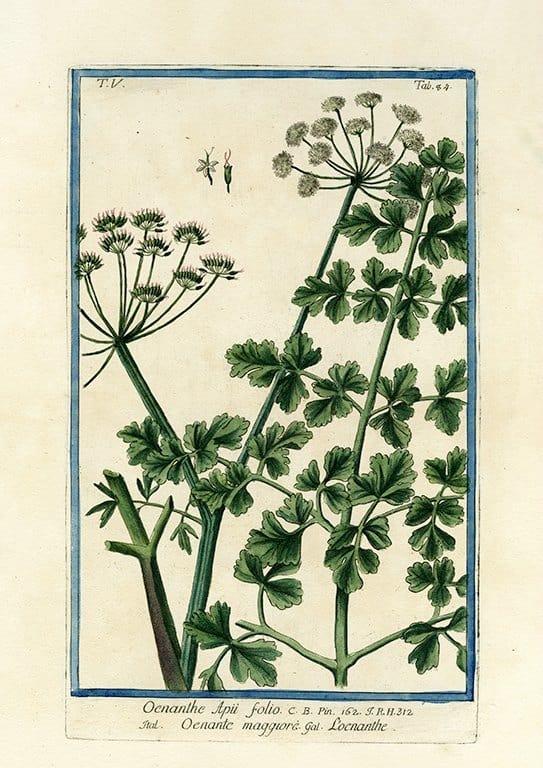 Bonelli Botanical BotBB12a - Framed Artwork from Interior Elements, Eagle WI