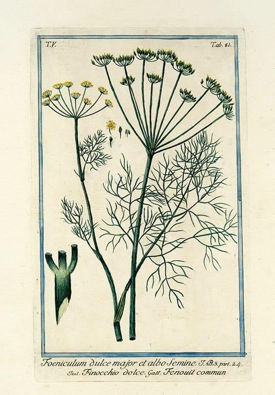 Bonelli Botanical BotBB1a - Framed Artwork from Interior Elements, Eagle WI