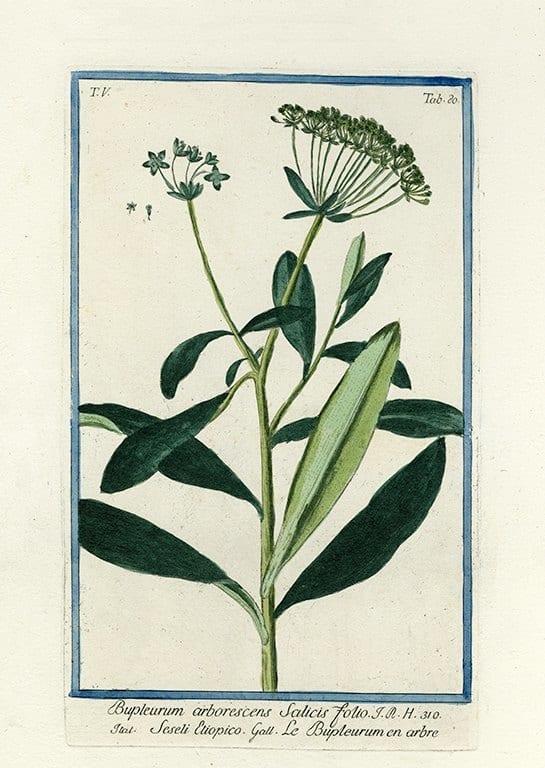 Bonelli Botanical BotBB2a - Framed Artwork from Interior Elements, Eagle WI