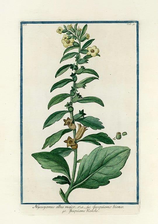 Bonelli Botanical BotBB3a - Framed Artwork from Interior Elements, Eagle WI