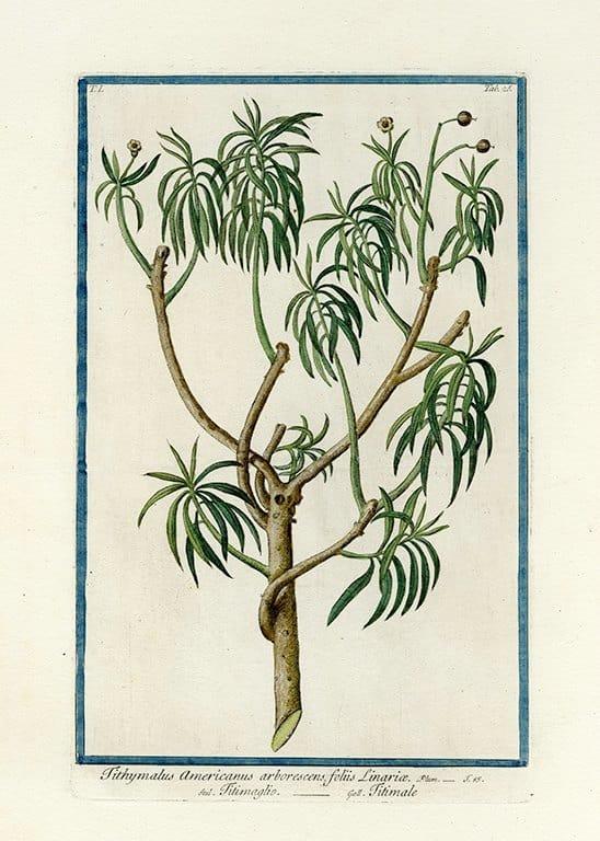 Bonelli Botanical BotBB4a - Framed Artwork from Interior Elements, Eagle WI