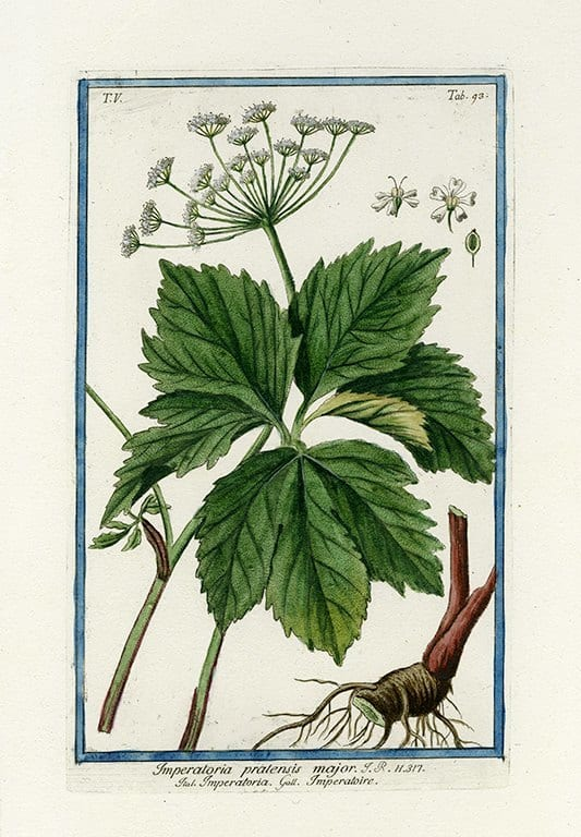 Bonelli Botanical BotBB5a - Framed Artwork from Interior Elements, Eagle WI