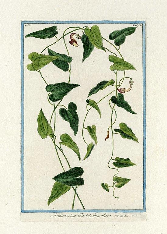 Bonelli Botanical BotBB6a - Framed Artwork from Interior Elements, Eagle WI