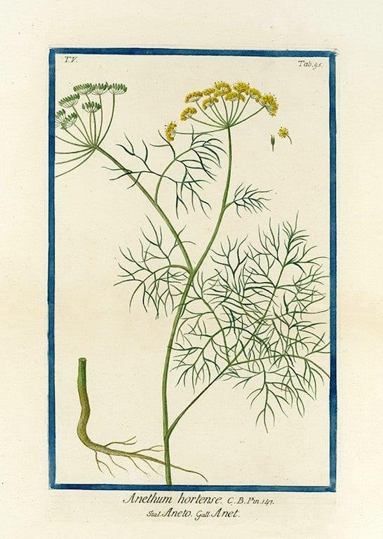 Bonelli Botanical BotBB7a - Framed Artwork from Interior Elements, Eagle WI