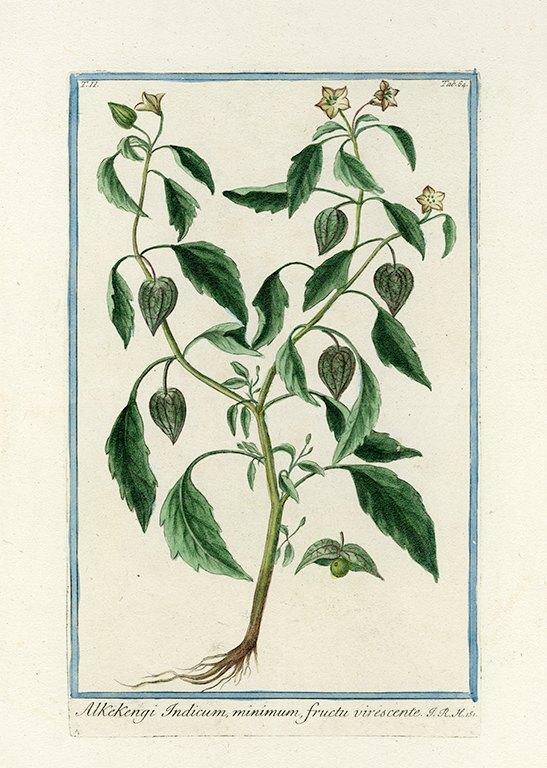 Bonelli Botanical BotBB8a - Framed Artwork from Interior Elements, Eagle WI