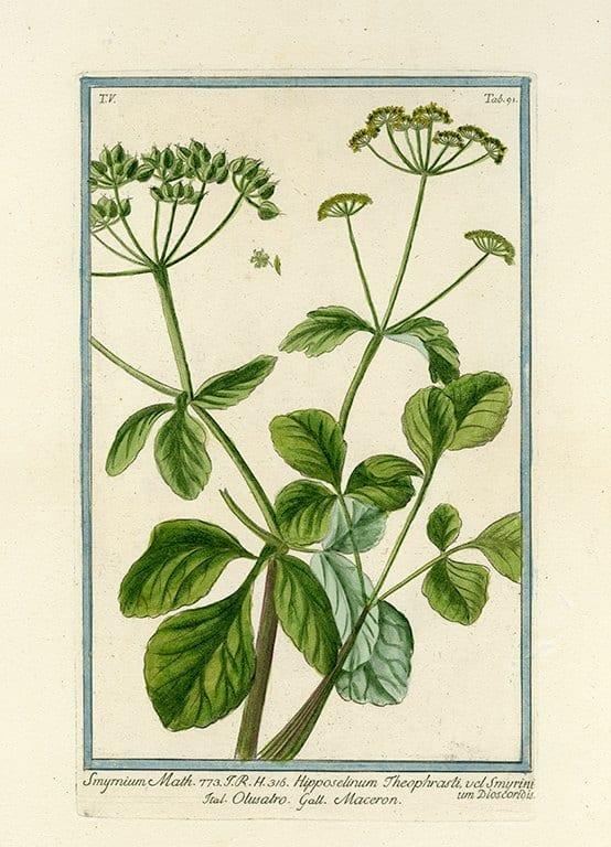 Bonelli Botanical BotBB9a - Framed Artwork from Interior Elements, Eagle WI