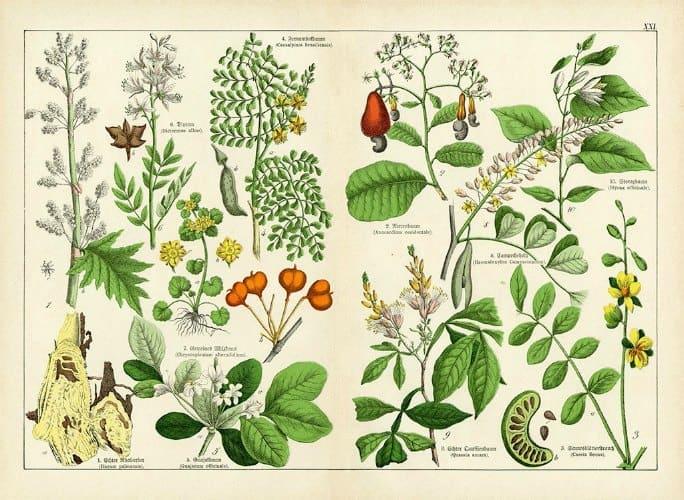 Botanical Shubert BotSh1 - Framed Artwork from Interior Elements, Eagle WI