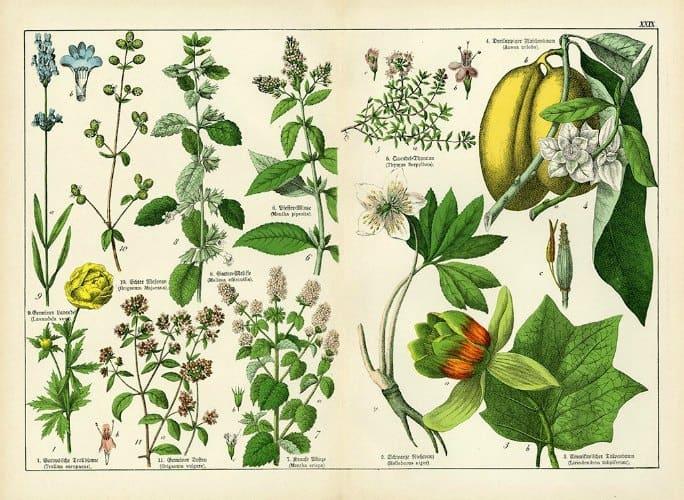 Botanical Shubert BotSh2 - Framed Artwork from Interior Elements, Eagle WI