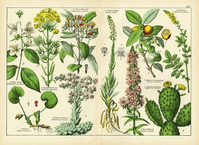Botanical Shubert BotSh4 - Framed Artwork from Interior Elements, Eagle WI