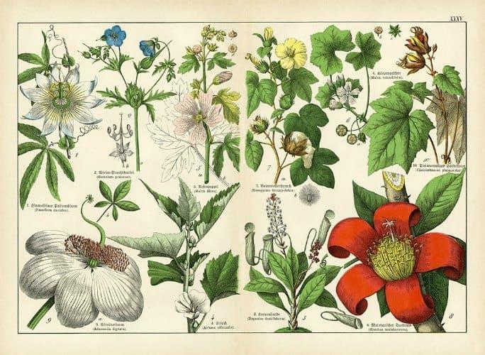Botanical Shubert BotSh5 - Framed Artwork from Interior Elements, Eagle WI