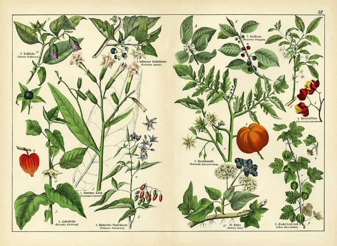 Botanical Shubert BotSh6 - Framed Artwork from Interior Elements, Eagle WI
