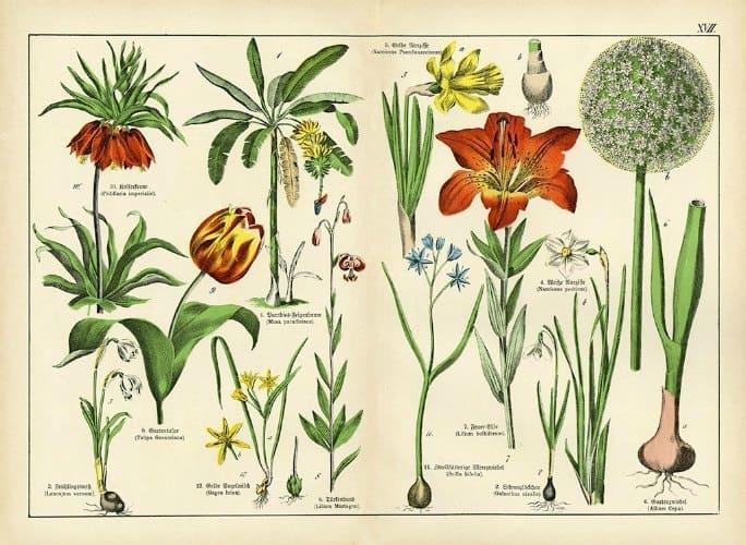 Botanical Shubert BotSh7 - Framed Artwork from Interior Elements, Eagle WI