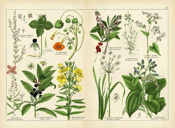 Botanical Shubert BotSh8 - Framed Artwork from Interior Elements, Eagle WI