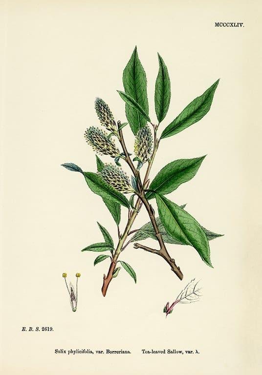 Botanical Sowerby BotS1 - Framed Artwork from Interior Elements, Eagle WI