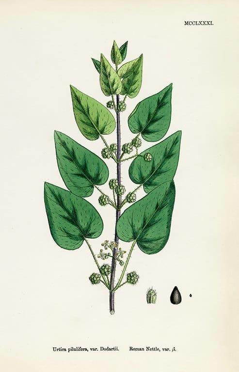 Botanical Sowerby BotS6 - Framed Artwork from Interior Elements, Eagle WI