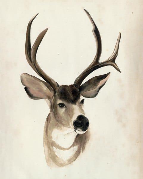 Deer SSWD2 - Framed Artwork from Interior Elements, Eagle WI