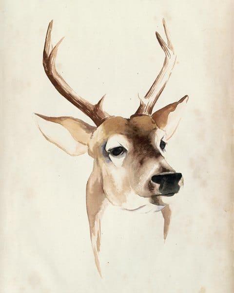 Deer SSWD4 - Framed Artwork from Interior Elements, Eagle WI