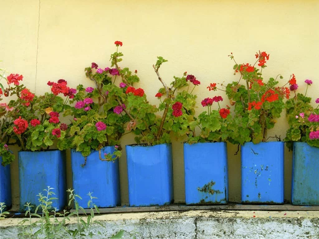 Geraniums Photo PH5 - Framed Artwork from Interior Elements, Eagle WI