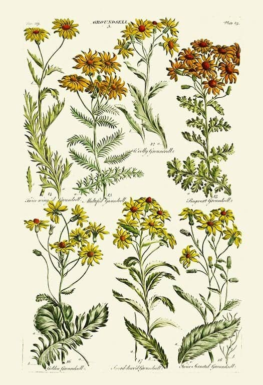 Hill Botanical HILL25 - Framed Artwork from Interior Elements, Eagle WI