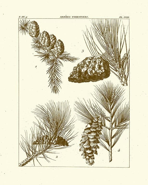 Pine Cones BotBM2 - Framed Artwork from Interior Elements, Eagle WI