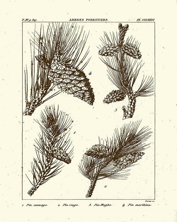 Pine Cones BotBM3 - Framed Artwork from Interior Elements, Eagle WI