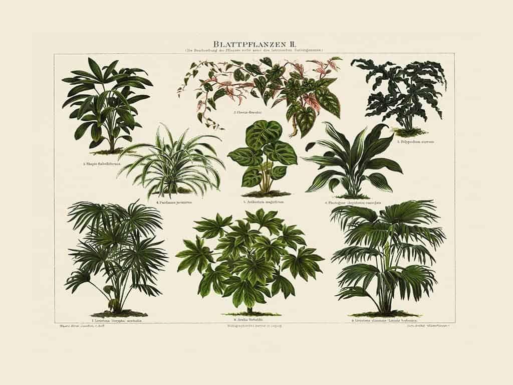 Plants BotP1 - Framed Artwork from Interior Elements, Eagle WI