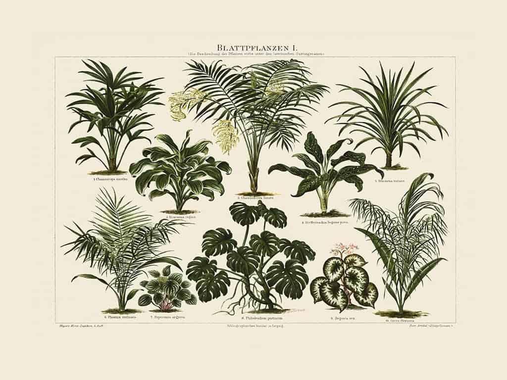 Plants BotP2 - Framed Artwork from Interior Elements, Eagle WI
