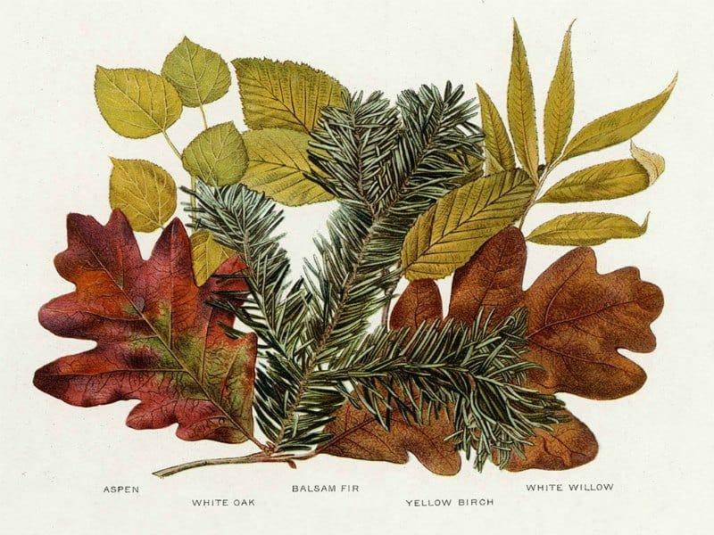 Tree Leaves BotTL3 - Framed Artwork from Interior Elements, Eagle WI