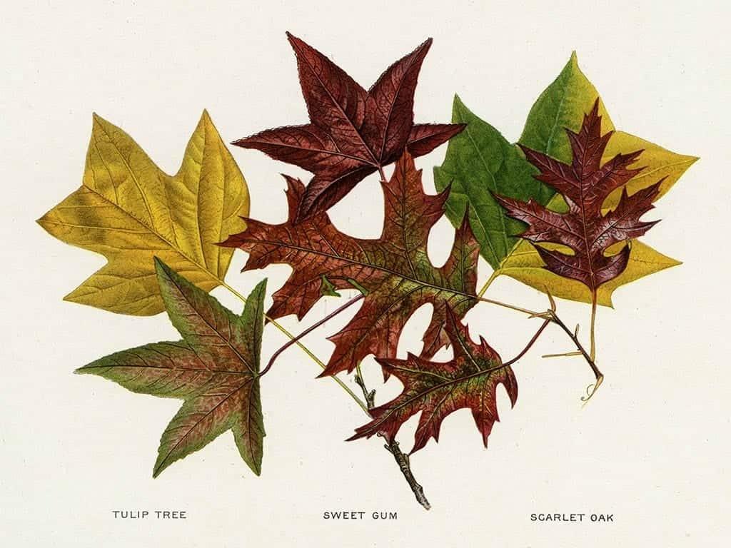 Tree Leaves BotTL4 - Framed Artwork from Interior Elements, Eagle WI