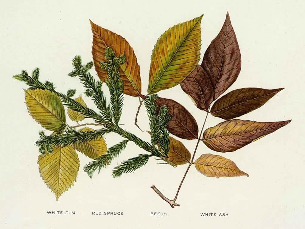 Tree Leaves BotTL5 - Framed Artwork from Interior Elements, Eagle WI