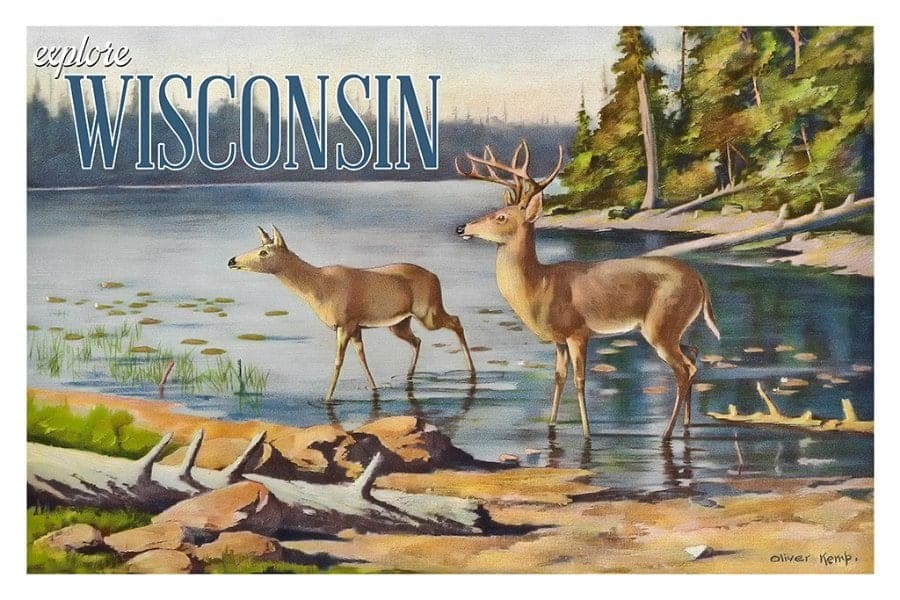 Wisconsin Deer WPD - Framed Vintage Artwork from Interior Elements, Eagle WI