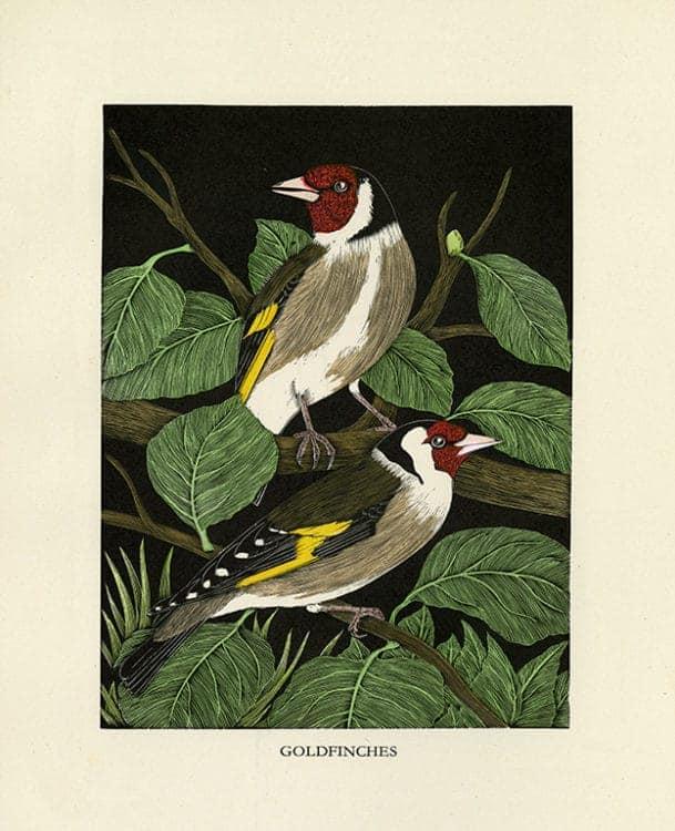 Daglish-Birds-BDB1 - Framed Artwork from Interior Elements, Eagle, WI