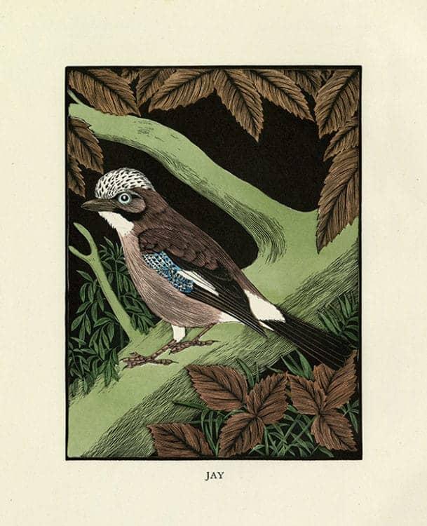 Daglish-Birds-BDB2 - Framed Artwork from Interior Elements, Eagle, WI