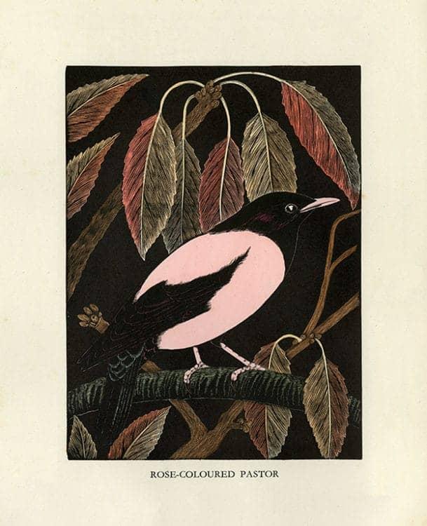 Daglish-Birds-BDB3 - Framed Artwork from Interior Elements, Eagle, WI