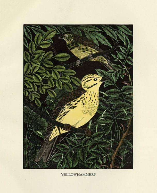 Daglish-Birds-BDB4 - Framed Artwork from Interior Elements, Eagle, WI